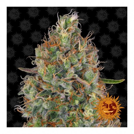 Sweet Tooth Auto