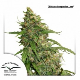 CBD Auto Compassion Lime